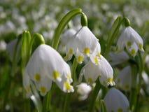 будить весну Стоковые Изображения RF