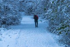 Будьте отцом носить его маленькую дочь в Forest Park во время сильного снегопада стоковые фото