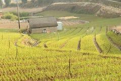 будьте фермером зеленый лук Стоковое Изображение