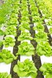 будьте фермером hydroponic Стоковые Фото