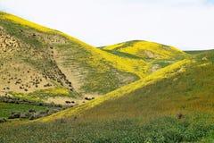 Буерак Wildflowers Стоковые Изображения RF