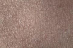 буйволовая кожа Стоковое Фото