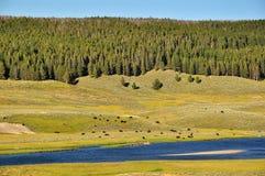 буйволы Стоковое Изображение