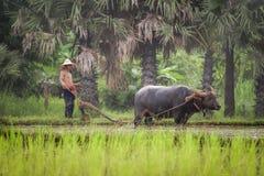 Буйвол румпеля фермера Стоковое Фото