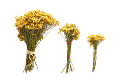 3 букета высушенных цветков на белой предпосылке Стоковое Фото