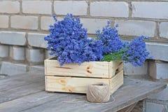 Букеты лаванды в деревянной коробке и катушки веревочки Стоковые Фотографии RF