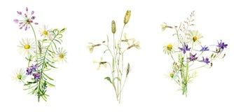 Букеты дикого, цветки акварели иллюстрация вектора