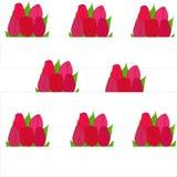 Букеты тюльпанов в строках Стоковые Изображения RF