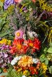 букеты цветков и трав Стоковые Фото