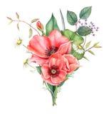 Букет акварели красных мака, стоцвета и растительности изолированного на белой предпосылке Иллюстрация покрашенная рукой Бесплатная Иллюстрация