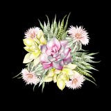 Букет акварели с кактусами и succulents Стоковое Фото