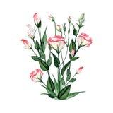 Букет акварели флористический Стоковые Фото
