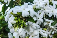 Букет белого цветка стоковое изображение