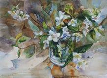 Букет белого жасмина цветения в стеклянной картине акварели Стоковое Фото