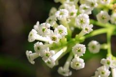 Букет белого цветка стоковые изображения