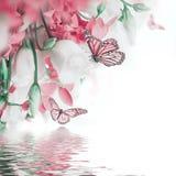 Букет белых и розовых роз, бабочки Стоковые Фото