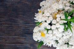 Букет белых маргариток Стоковое Изображение RF
