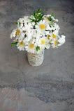 Букет белых маргариток Стоковое Изображение