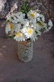 Букет белых маргариток Стоковое Фото
