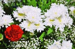Букет белых хризантем и гвоздик Стоковое Изображение
