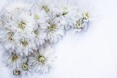 Букет белых хризантем на белой предпосылке Стоковое Изображение