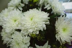 Букет белых хризантем на празднике Стоковая Фотография