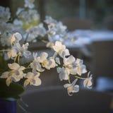 Букет белых цветков орхидеи Стоковые Изображения RF