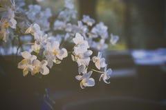 Букет белых цветков орхидеи Стоковое Фото