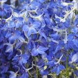 Букет бутонов цветка Columbine для wedding торжеств Стоковая Фотография