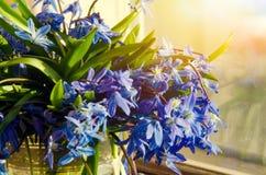 Букет вазы голубых snowdrops стеклянной на windowsill в теплых лучах солнца весны Концепция подхода весны Стоковые Изображения RF
