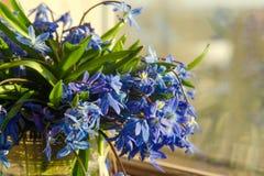 Букет вазы голубых snowdrops стеклянной на windowsill Концепция подхода весны Стоковое Фото