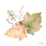 Букет вектора акварели листьев и ветвей изолированных на белой предпосылке Стоковые Изображения