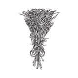 Букет вектора травы падиа Стоковое Изображение