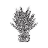 Букет вектора травы падиа Стоковые Фото