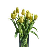 Букет весны желтых тюльпанов изолированных на белой предпосылке в ведре Стоковая Фотография