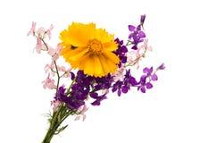 Букет весны изолированных цветков Стоковые Изображения