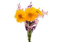 Букет весны изолированных цветков Стоковая Фотография RF