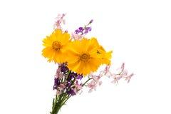 Букет весны изолированных цветков Стоковая Фотография
