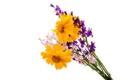 Букет весны изолированных цветков Стоковые Изображения RF