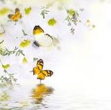 Букет весны маргариток и бабочки Стоковые Фото