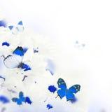 Букет весны маргариток Стоковая Фотография RF