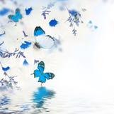 Букет весны маргариток Стоковая Фотография