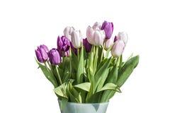 Букет весны розовых и белых тюльпанов изолированных на белой предпосылке в ведре Стоковое фото RF