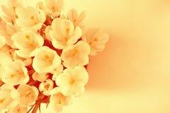 Букет весны цветков Стоковая Фотография RF