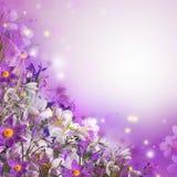 Букет весны Стоковое Изображение