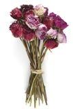 Букет высушенных роз на белизне Стоковые Изображения