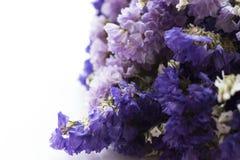 Букет высушенных цветков statice стоковая фотография