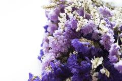 Букет высушенных цветков statice стоковое фото