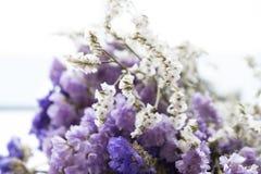 Букет высушенных цветков statice стоковое фото rf