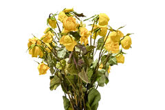 Букет вянуть высушенных желтых роз Стоковые Фото